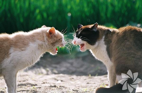 Bir kadınla bir kedi arasındaki 15 benzerlik 10