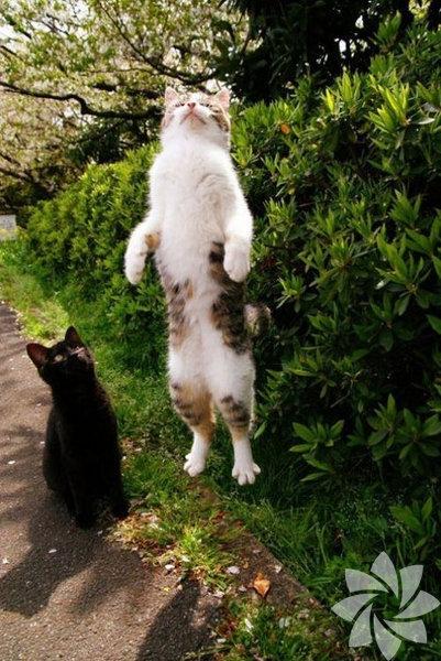 Bir kadınla bir kedi arasındaki 15 benzerlik 12