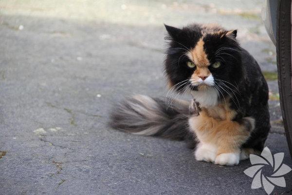 Bir kadınla bir kedi arasındaki 15 benzerlik 15