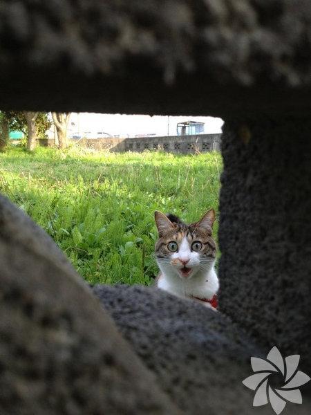 Bir kadınla bir kedi arasındaki 15 benzerlik 5