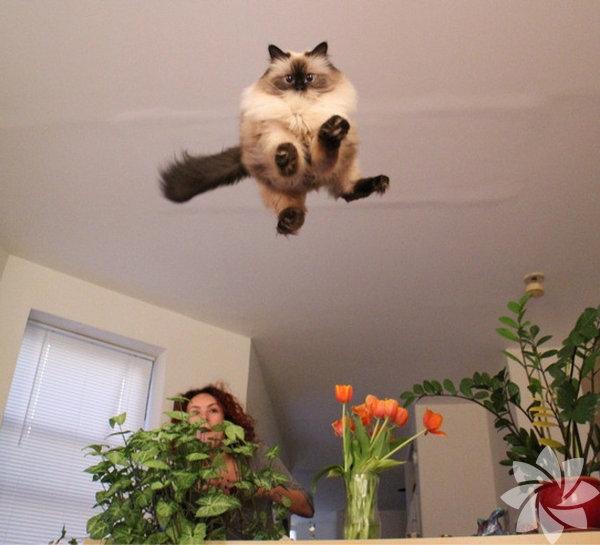 Bir kadınla bir kedi arasındaki 15 benzerlik 7