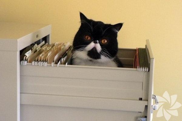 Bir kadınla bir kedi arasındaki 15 benzerlik 9