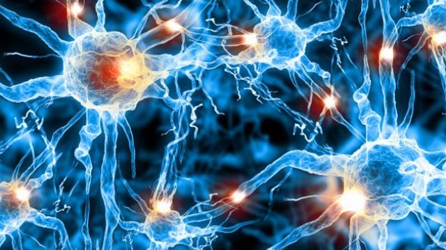 Canlı beyin hücresi modeli oluşturdu