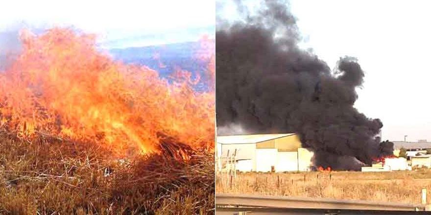 Aydınköy'de dün çıkan yangında zeytin ve narenciye ağaçları zarar gördü