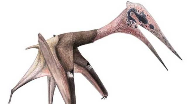 Moğolistan'da dinozor yiyen dev yaratık fosili keşfedildi…