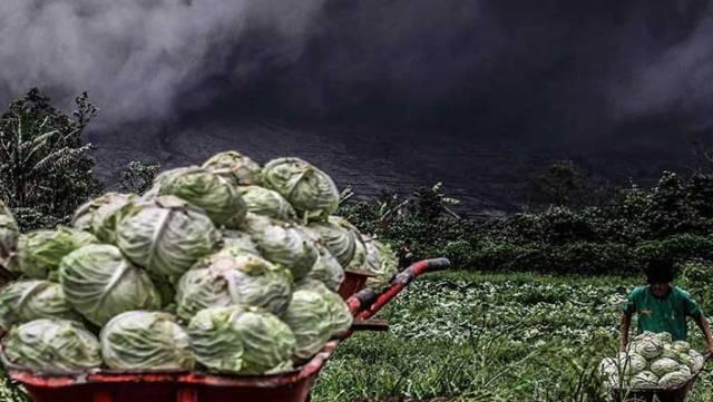 Sinabung Yanardağı çevre köylere zarar vermeye başladı
