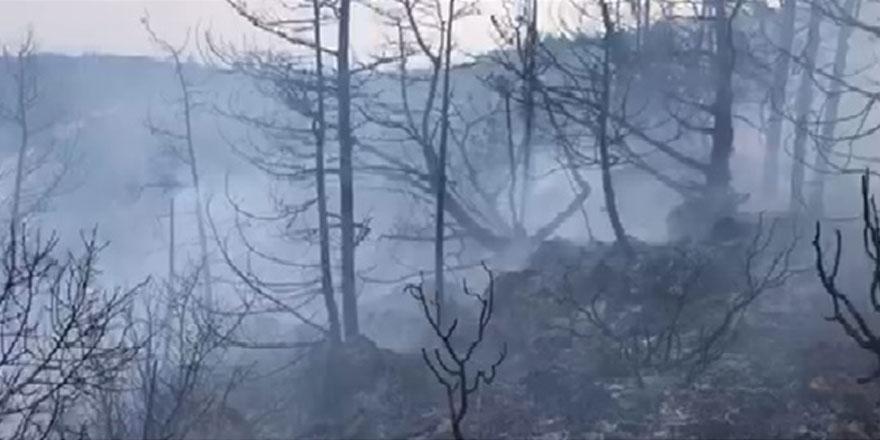 """""""Kantara yangınıyla ilgili bazı haber ve fotoğraflar gerçekleri yansıtmıyor"""""""