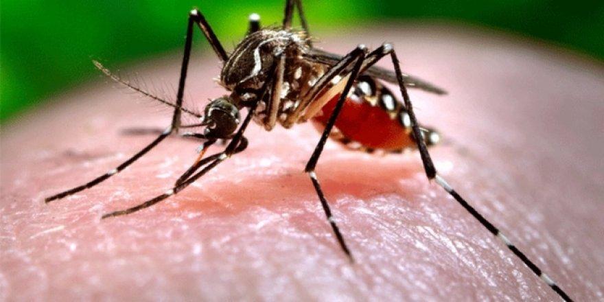Batı Nil Virüsü'nden bir ölüm daha!