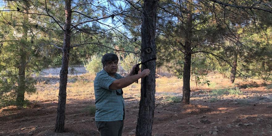 Salamis ormanlarına kuş yuvası yerleştirme hafta sonu devam edecek