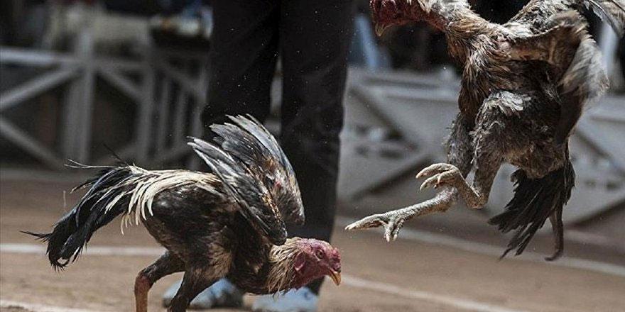 Hayvan dövüştürene ertelemesiz hapis cezası talebi
