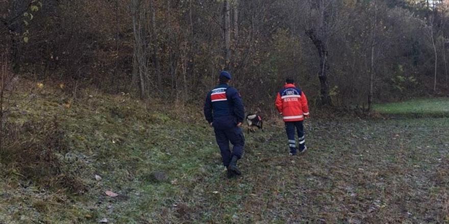 Ormanda ceset parçaları bulundu