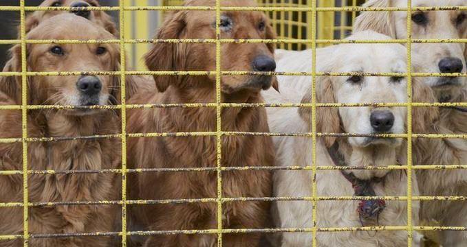 Çin'de kedi ve köpek satışı yasaklanacak