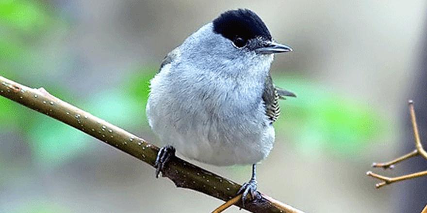 Kanunsuz Pulya kuşu avlanan iki kişi tespit edildi