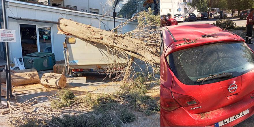 Şiddetli fırtınadan ağaç söküldü 4 araç hasar gördü