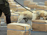 Suç örgütü polis köpeğinin başına para ödülü koydu