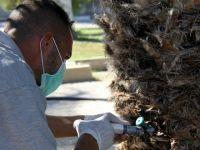 İskele Belediyesi Palmiye Kırmızı Böceği ile mücadeleye başladı